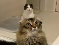 猫から生えた猫