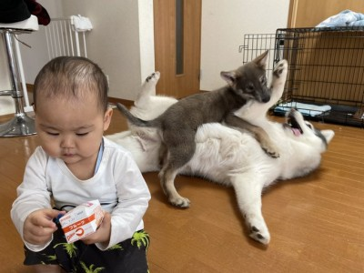ジュースに夢中な赤ちゃん・こつるくん。その後ろでは犬たちのじゃれあいが。「赤ちゃん、後ろ後ろ!」「情報量多すぎw」とTwitterで大反響だった一枚