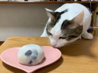 本物の豆大福と猫の豆大福