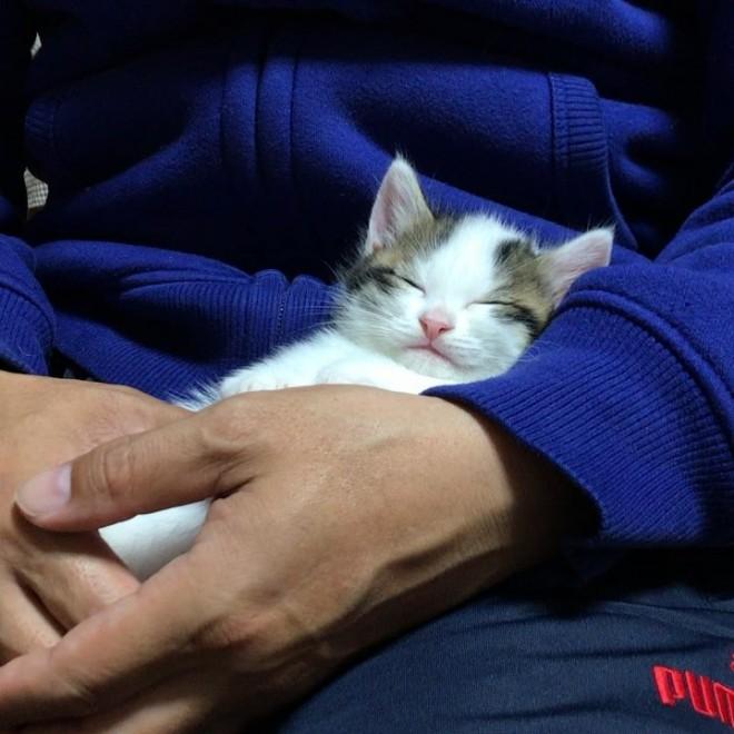 天使のような寝顔…子猫時代の豆大福