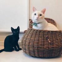 新旧バズり猫の2匹(左から預かり猫のあんこちゃん、オコジョ)