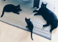 黒猫3匹が集結(ゲンちゃんとクロネコ、あんこちゃん)