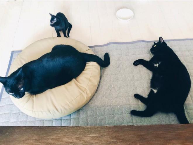 黒猫3ショット