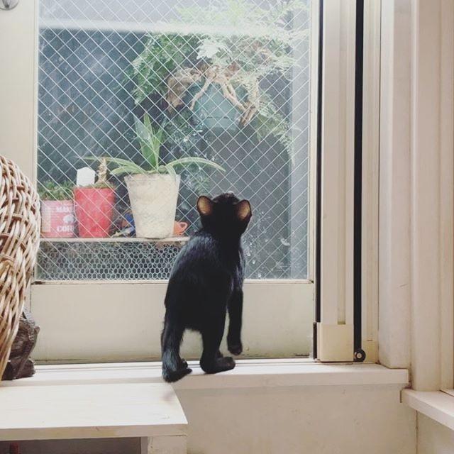 預かり猫のあんこちゃん