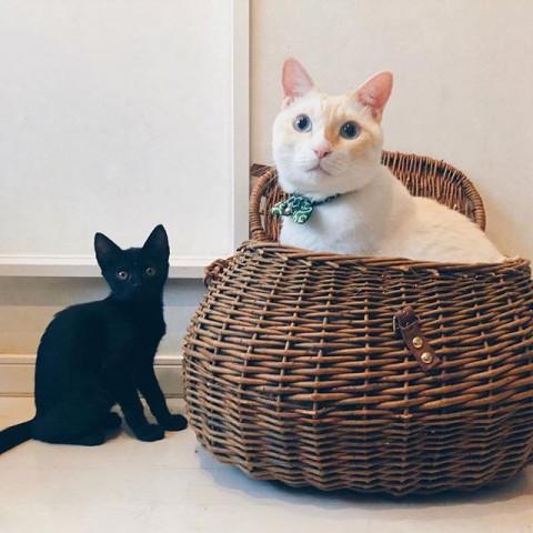 サムネイル 【猫】新旧バズり猫も、キョウ家のストリート出身にゃんこたち