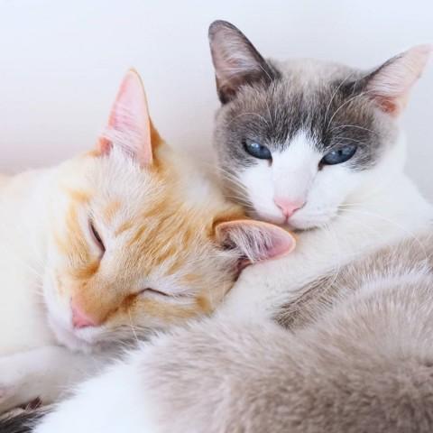 サムネイル 【猫】保護猫施設出身のチャコたんとすず香の日常