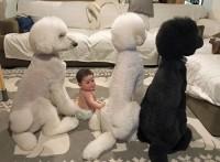 赤ちゃんの頃から犬たちとともに過ごしてきた姉・まめちゃんと弟・むーむくん