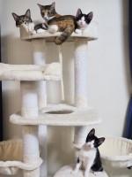今預かっている猫ちゃんたち