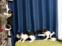 にぎやかに暮らす黒×白猫ズ