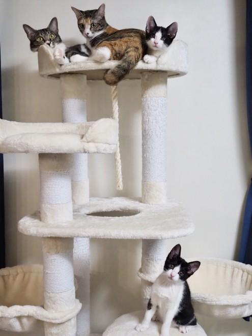 保護猫活動で預かっている猫たち
