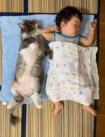 生まれた時から猫のエルモ・みみりんと一緒に生活してきた1歳の息子さん