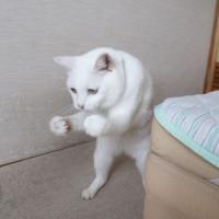 (画像提供:かなかな)