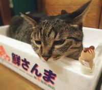 猫ににらまれるリスの赤ちゃん(画像提供:エモりすさん)