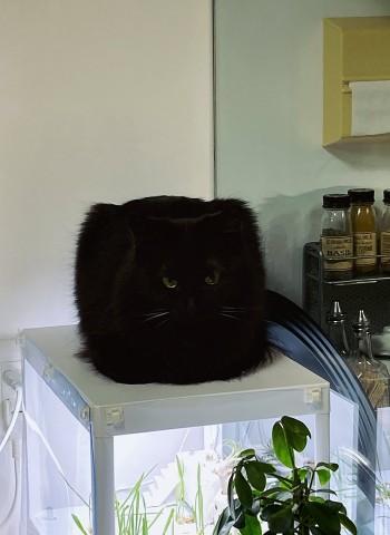 サムネイル 【猫】サユヤス家の保護猫5匹フォトギャラリー