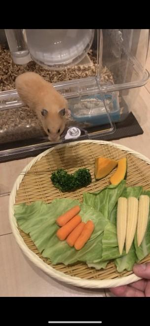 飼い主が栽培している家庭菜園でとれた野菜パーティをするはむはむ 画像提供:野田クリスタル