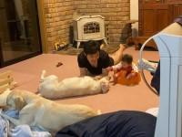 赤ちゃんを守ってるような動きを見せるというラブラドールのゴンとサン