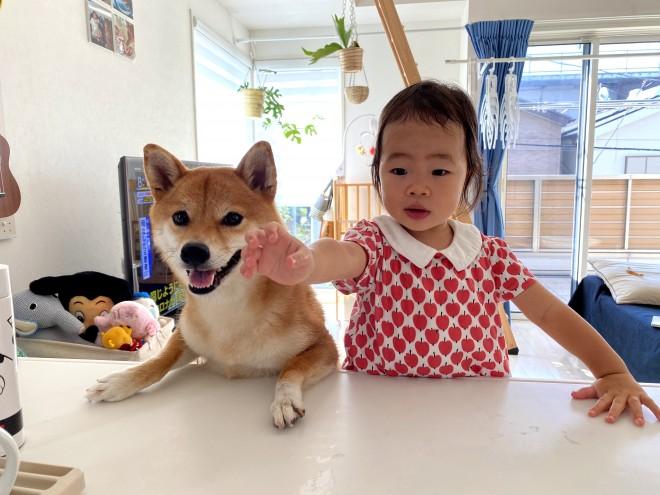 柴犬の花子ちゃんと現在は3才の娘さん