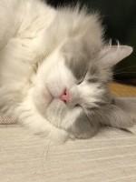 天使な寝顔