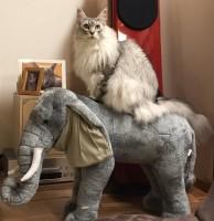 ジャングル大帝にインスパイアされた猫がこちら