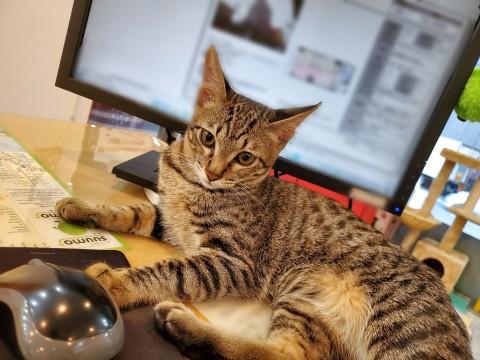 サムネイル 【猫】ねこがいる不動産屋