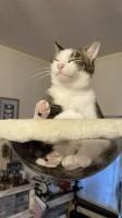 猫仏カット