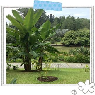 シンガポールで初めて世界遺産に登録されたスポット「ボタニック・ガーデン」。東京ドーム13個分の敷地面積で、全部を見て回るには半日はかかってしまうそう…。常夏のシンガポールでも、緑や水辺が広がる植物園はマイナスイオンたっぷりの癒やしスポットです♪