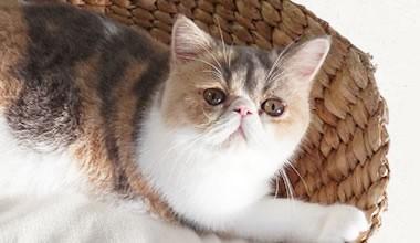 サムネイル 人気猫大集合! 猫に癒されるひととき