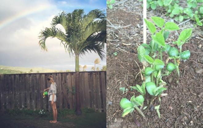 (左)庭の植物に水をまくひなのさん/(右)昨年は枝豆を育てていたそう