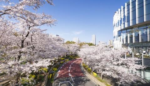 ロマンチックに春を味わう! 東京で桜を満喫