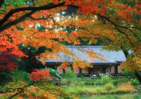 サムネイル 地元・京都人おすすめ! 京都【穴場】紅葉スポット5選