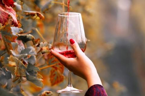 困ったらコレ! 手土産でハズさないワイン銘柄 <シャンパン・赤・白・ビオ>
