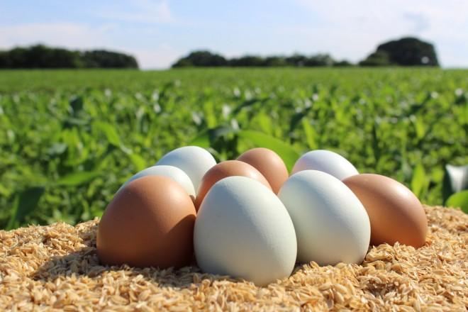 サムネイル 【プレゼント】東北牧場の超高級「卵」、青玉&赤玉セットギフトカード