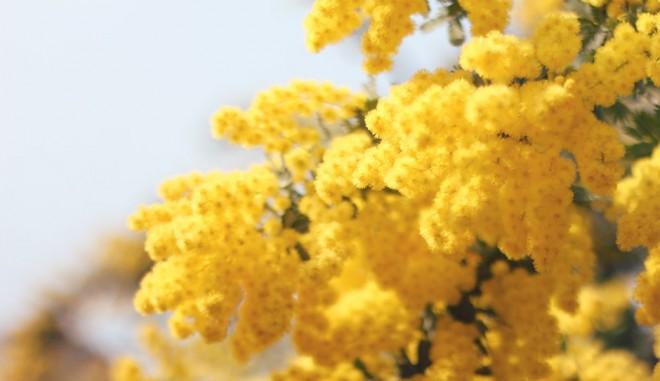 サムネイル 最新キーワードでPICK UP! 快適に春を過ごすための花粉症対策グッズ