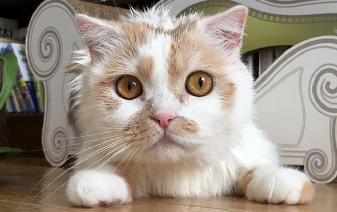 サムネイル フォロワー24万・愛猫「ホイちゃん」の日常が人気、飼い主に聞くペットを発信するコツ