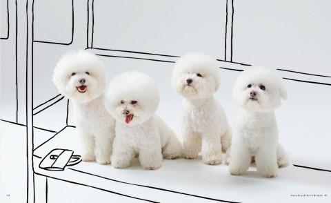 """まるで動くわたあめ…ドラマで話題の犬ビションフリーゼ、飼い主に聞く""""白モフ""""の魅力"""