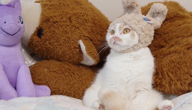 """サムネイル SNSの人気猫「ホイちゃん」も単独展を開催、主催者に聞く""""猫イベント""""の成功法則"""