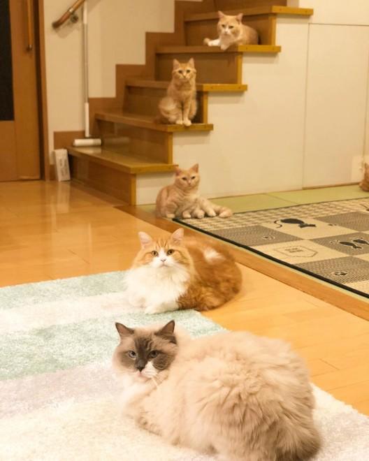 """サムネイル 短足猫家族「まいる」がSNSで人気、""""携帯音痴""""乗り越え「猫いる生活」を発信"""