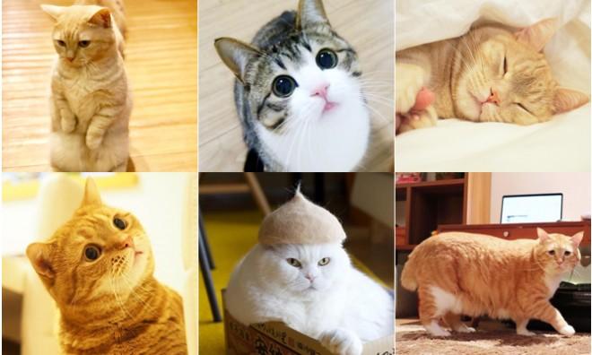 """サムネイル 【かわいいねこ】アイドル猫、ブサ猫、保護猫…SNSで話題のあの猫が""""バズったワケ""""まとめ"""
