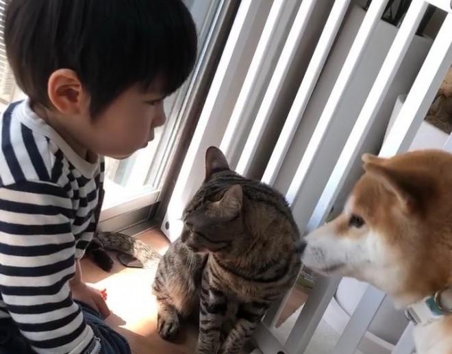 """サムネイル """"子守マスター""""に""""犬との三角関係""""…人気猫と子供たちの絆"""