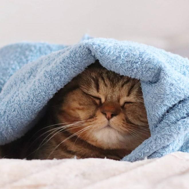 """サムネイル 「雨の日は寝るに限る」ブサカワ寝顔が話題 じっと見つめる""""困り顔""""がお迎えの決め手"""