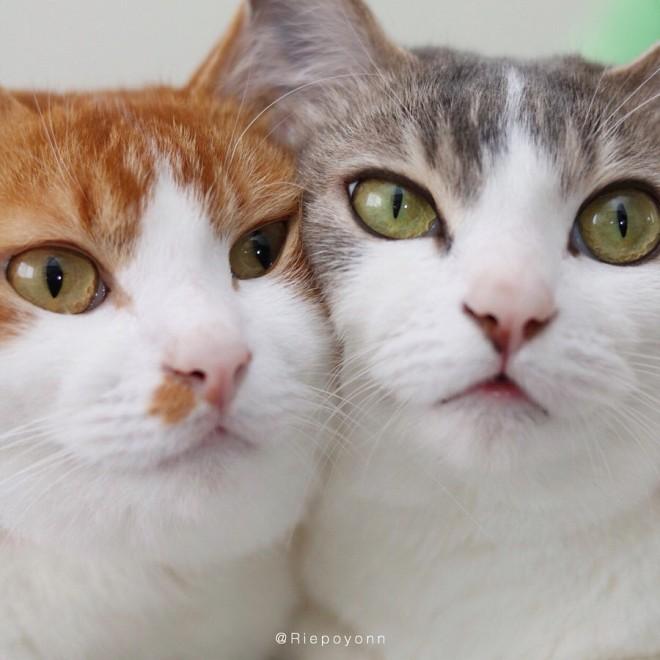 """サムネイル しっぽの先までラブラブ…保護猫のそら&双子猫""""アメカヌ""""と飼い主の愛に溢れた毎日"""