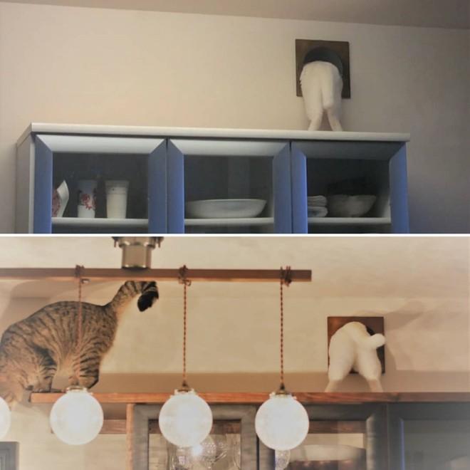 人気の「猫トンネル」