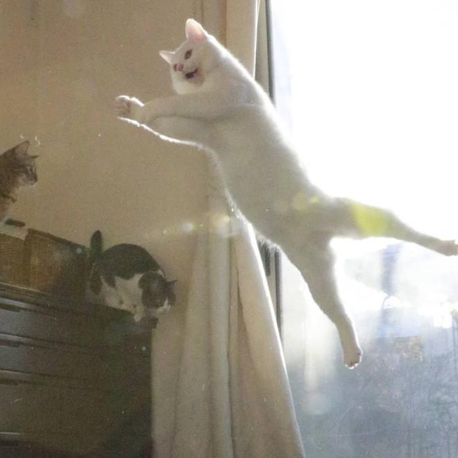 "SNSで""無重力猫""と呼ばれ人気のミルコ"