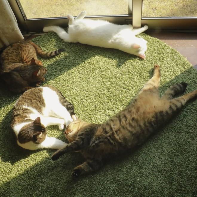 思い思いの時間を過ごす猫たち