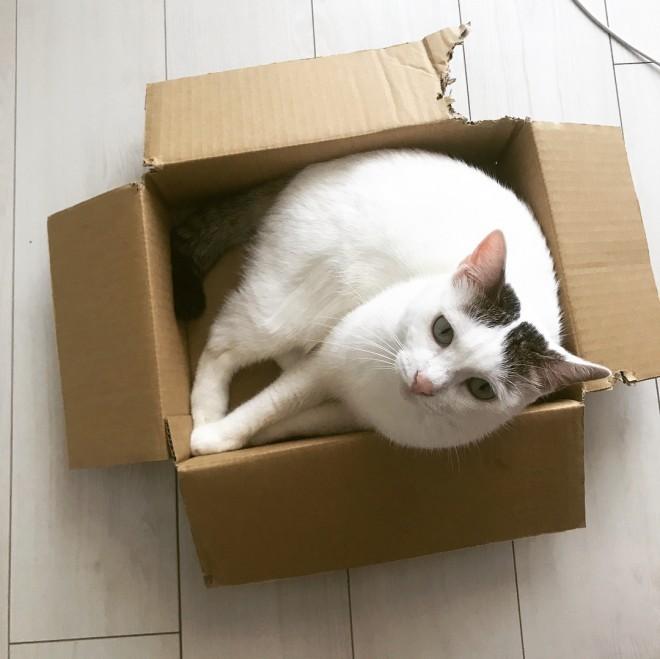 """サムネイル 箱が大好きな""""モフモフ3匹""""トン・シノ&たねお 無条件で幸せになれる「猫あるある」"""