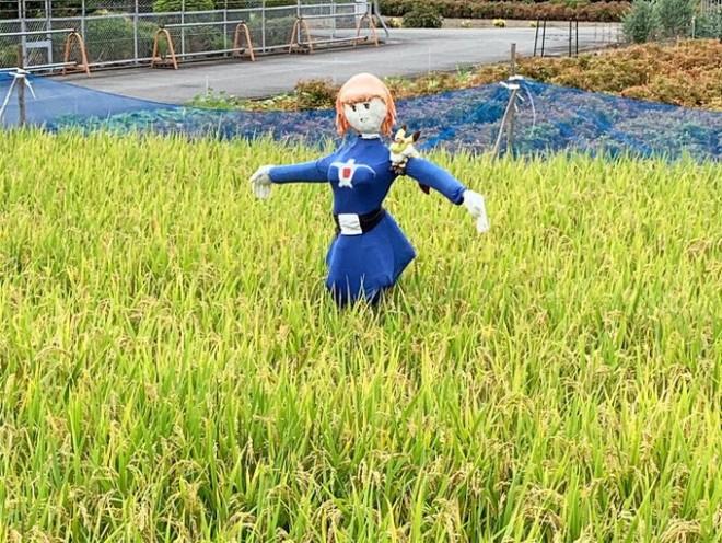 蒼き衣を纏いて金色の野に降り立つナウシカ? その正体は田んぼに佇むカカシで、田んぼの前の道が2匹のお散歩コースにもなっている
