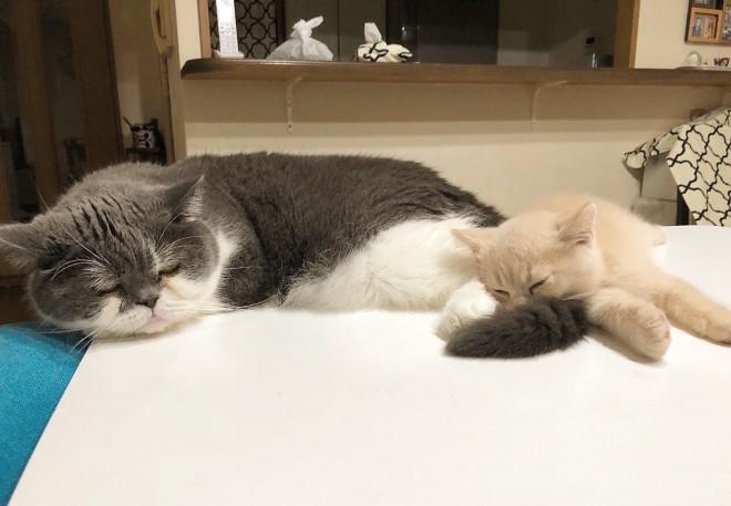猫ちゃんたちの寝顔は何よりの癒し