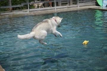 飛び込みの技もピカイチ