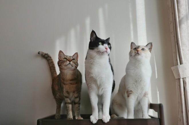 """サムネイル 愛猫3匹が狙うは太もも!? 飼い主ならではのうれしい悩み""""ふみふみ"""""""