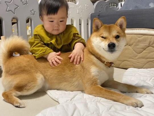 """赤ちゃんを見守る姿が頼もしい、""""柴犬兄さん""""りんご郎くん(画像提供:@ringoro119)"""